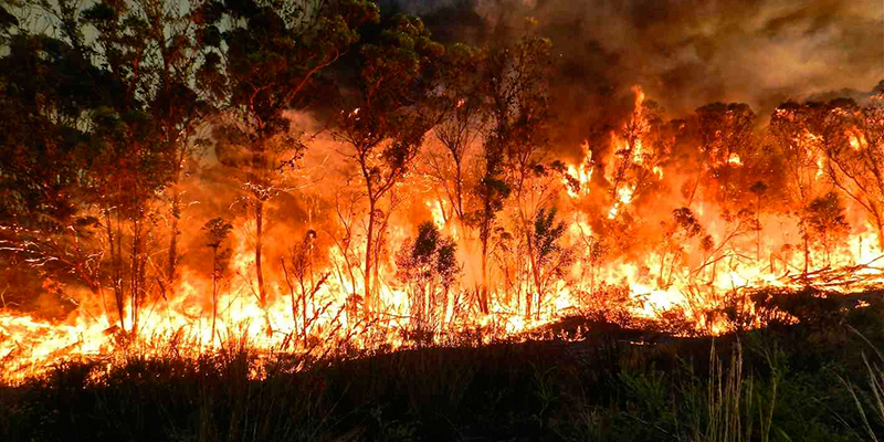 Landowner Tip: Using controlled burning as a tool for Invasive Alien Plant clearing