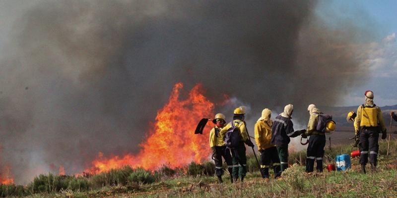 Help to burn renosterveld