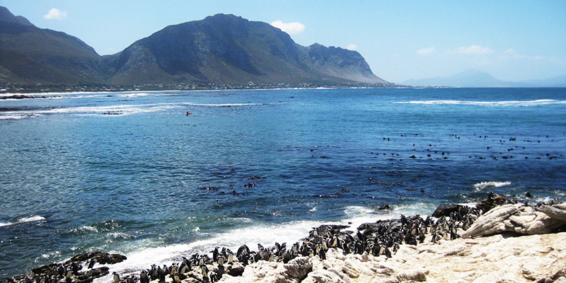 Pringle Bay hosts fire-fighting open day
