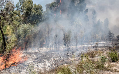 A devastating Overberg fire season
