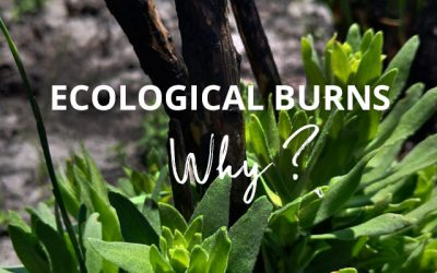 Why ecological burns?