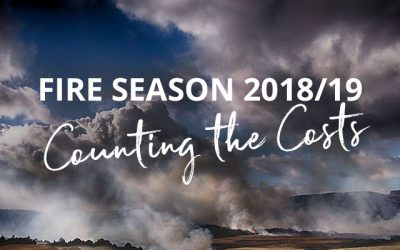 A devastating fire season – the goFPA counts the costs