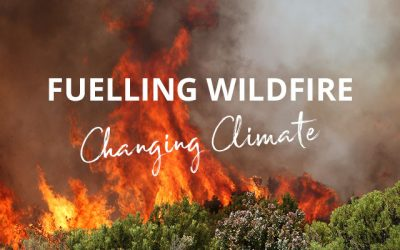 Why a changing climate is fuelling wildfire