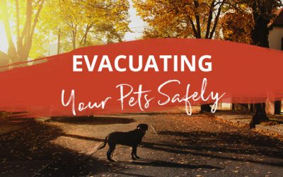 Evacuating your pets safely (tips from Dr Hensie Lategan)