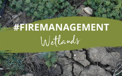 World Water Day: Tips for fire management in wetlands
